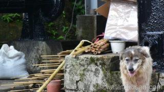 台湾旅行で野犬に襲われないための対策3つ【知らないと怖い】