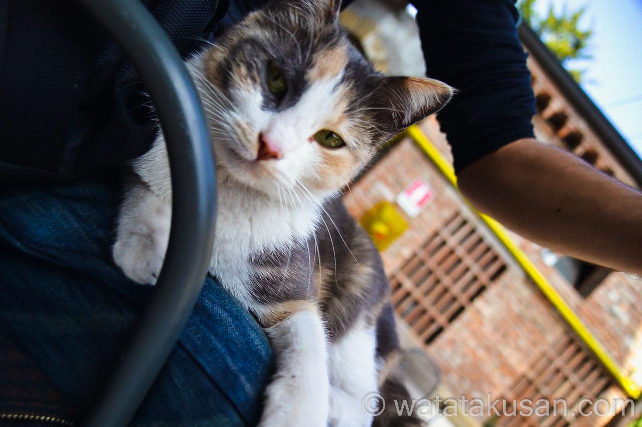 近寄ってくる猫の夢の意味は当たっているのかどうか
