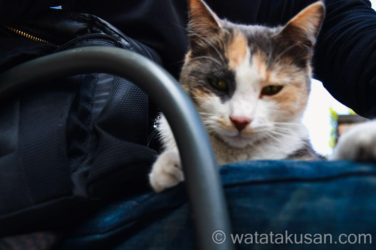 【夢の中での経験談】野良猫が近寄ってきて玄関のドアを見た