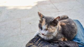 【夢占い経験談】近寄ってくる猫の夢はラッキーなことが近づいてくる暗示なので嬉しい