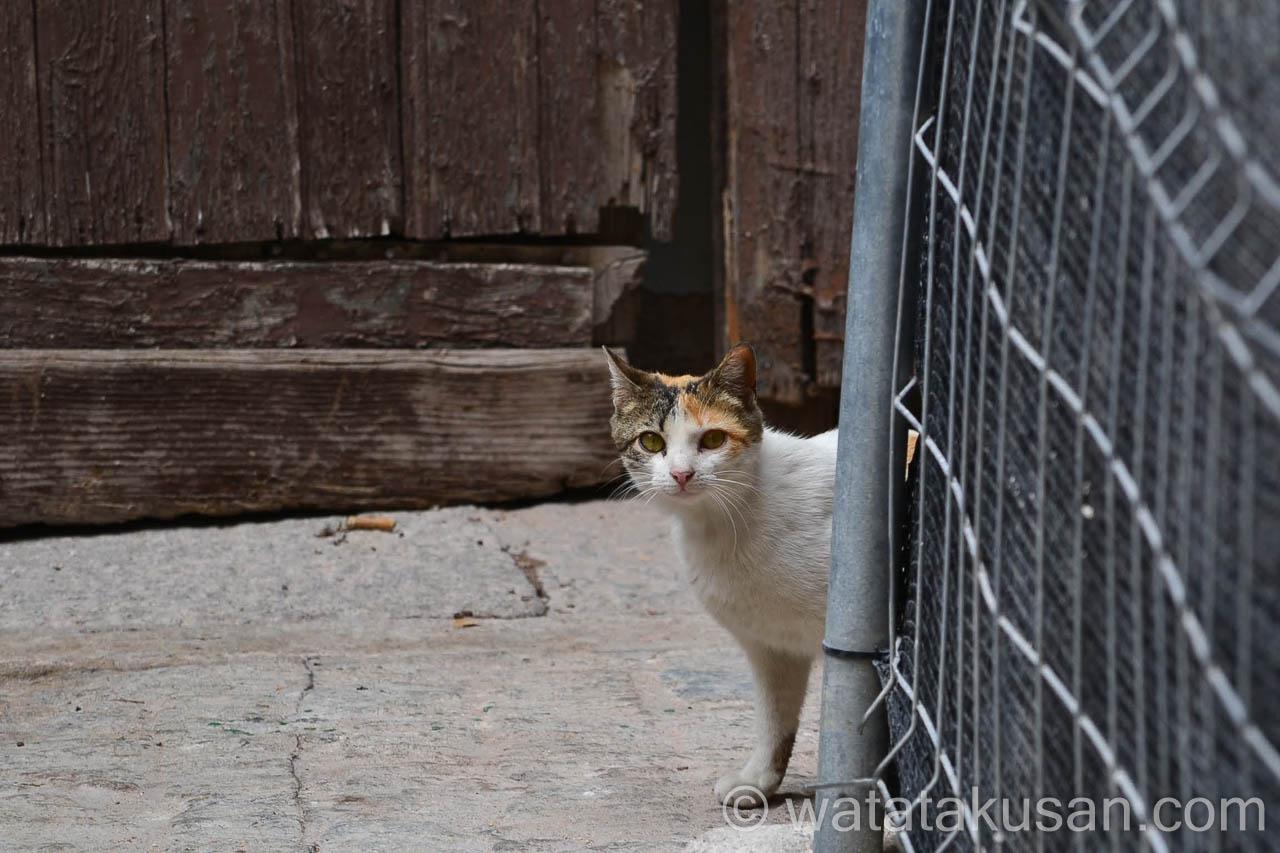 夢占いサイトでの野良猫の夢の意味