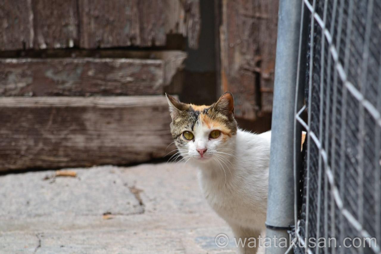 野良猫の夢の意味は当たっているのかどうか