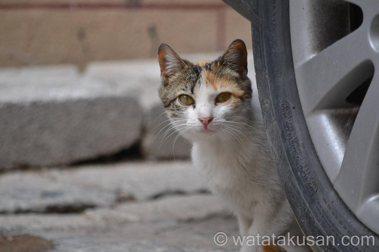【夢の中での経験談】野良猫が家の前に来た