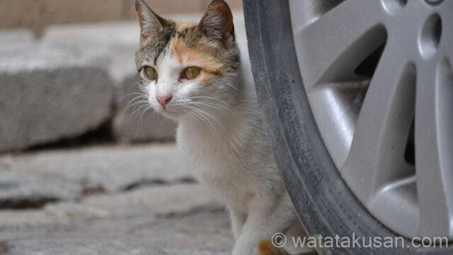 【夢占い経験談】野良猫の夢は1人でやっていける能力をつける行動をもっとしようってなる